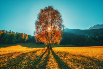 Fotorollo Herbst Autumn trees and orange leaves . Fall. Autumnal Park. Autumn scene