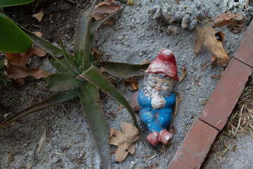 beat up old garden gnome with aloe vera plant