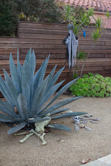 Halloween trick or treater scary decorations in yard with succulents