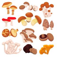 Fototapeta Mushrooms collection, isolated on white background. Vector flat cartoon illustration. Food ingredients design elements obraz