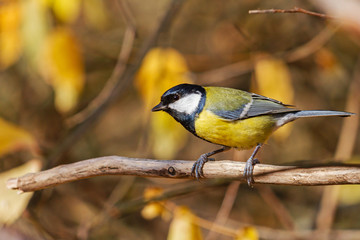 beautiful bird sits on a dry branch in autumn colors