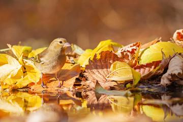 wild bird among fallen beautiful colorful leaves