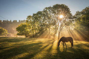 Sonnenstrahlen im Herbstnebel über dem Feld