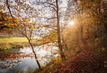 Landschaft im Herbst mit Wald und Wiese bei strahlendem Sonnenschein