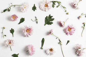 floral pattern. beautiful pink chrysanthemums and green leaves on a white background. simple flat lay composition