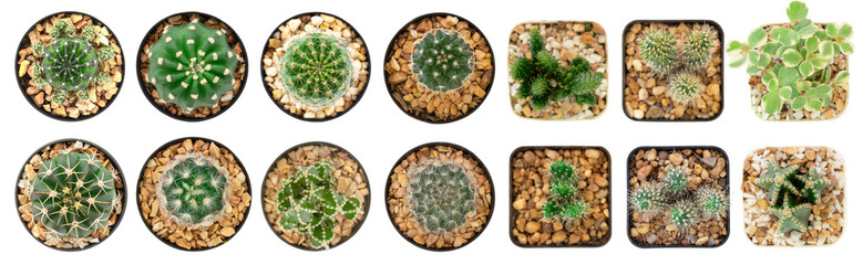 Photo sur Aluminium Cactus Top view of collection cactus isolated on white background with clipping path.