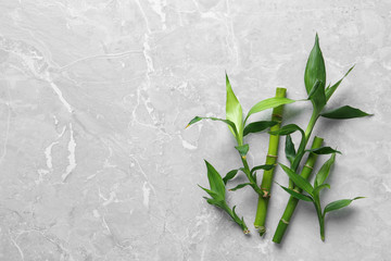 Deurstickers Bamboo Green bamboo stems on grey background, top view. Space for text