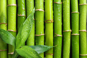 Green leaves on bamboo stems, top view