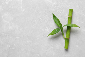 Green bamboo stem with leaves on light background, top view. Space for text
