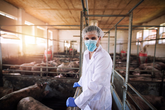 Portrait of veterinarian in white protective suit with hairnet and mask standing in pig pen observing domestic animals at pig farm.
