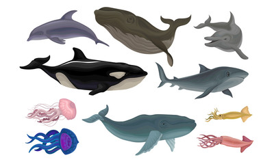 Marine Life Creatures Vector Volume Illustration Set