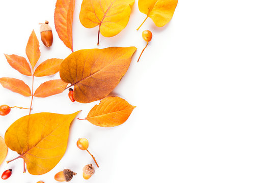 Autumn fall leaves. flat lay, top view. from different trees, yellow and orange, rose hip