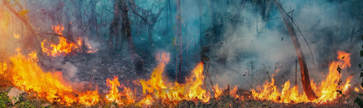 African forest fires in the Congo Basin ,Central Africa