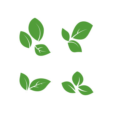 set of isolated green leaves vector icon design on white background. Various shapes of green leaves of trees and plants. Elements for eco and bio logos.