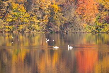 In de dag Oranje eclat Golden autumn trees and lake. Autumn landscape, sunny morning.