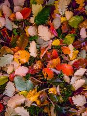 Buntes Herbstlaub auf einer Wiese