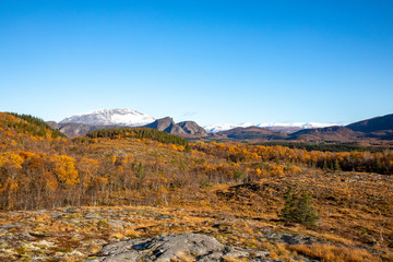 On a walk in beautiful autumn, Northern Norwegian nature is colored