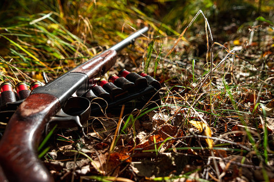 Hunting rifle and cartridges in the autumn forest close-up. The hunting period, the fall season is open, the search for prey.