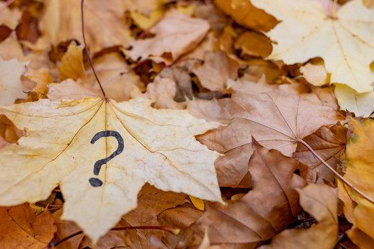 Autumn foliage is a question mark.