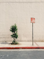 No parking sign and small tree on sidewalk