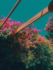 Climbing plants on terrace