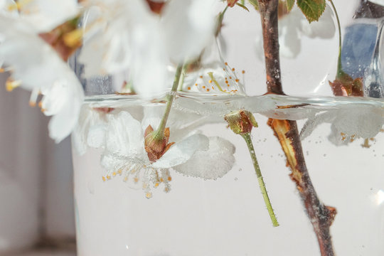Close up of white blooming flowers in glass vase