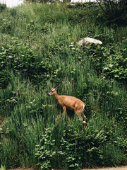 Deer in grassy field