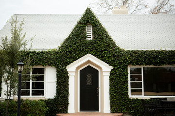 Facade of house overgrown by ivy