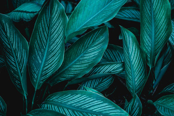 Wall Mural - green leaves nature  background, closeup leaves texture, tropical leaves