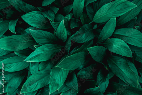 Wall mural tropical leaves, abstract green leaves texture, nature background