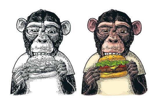 Monkey wearing a t-shirt eating a hamburger burger. Vintage color engraving