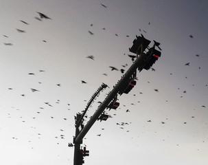 Birds perching on traffic light