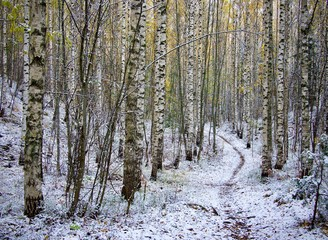 Winter landscape with first snow in the Finnish countryside forest path with late autumn colors.