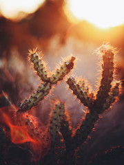 Cactus illuminated by afternoon light