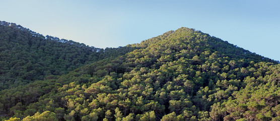 Forest covered hills at blue sky