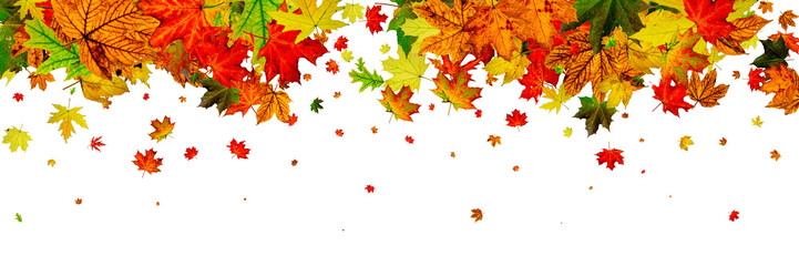Autumn leaf pattern. Season falling leaves background. Thanksgiv