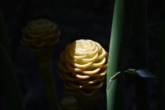 Animales y plantas en Colombia