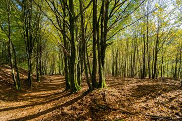 Fototapeta Herbstlicher Wanderweg
