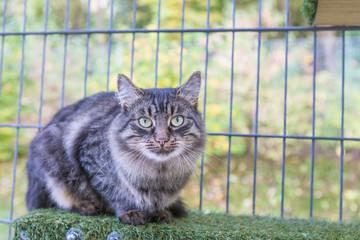 Main Coon Katze sitzt auf einem Brett