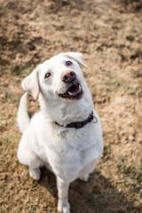 Freundlicher Hund sieht nach oben in die Kamera