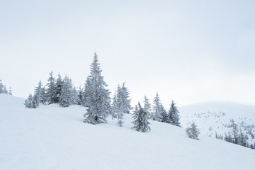 Tuinposter Wit Beautiful Winter Mountain Landscape with Snow Covered Fir Trees in the Morning.