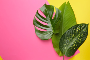 Wall Mural - Fresh tropical leaves on color background