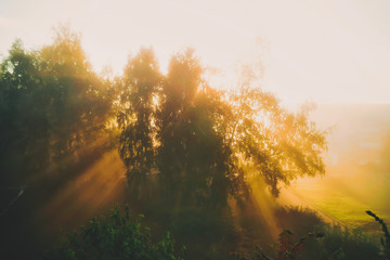 bright dawn on a summer morning. The sun's rays make their way through the branches of green birch trees and scatter in the fog. Warm colors