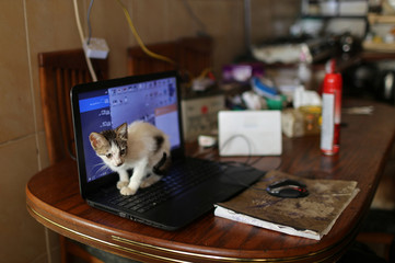 A cat is seen on a laptop inside the house of a Palestinian man Saeed el-Aer, who looks after abandoned cats, in the central Gaza Strip