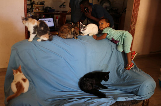 A girl looks on as cats sit on a sofa inside the house of a Palestinian man Saeed el-Aer, who looks after abandoned cats, in the central Gaza Strip
