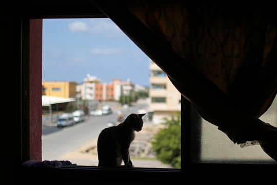 A cat is seen on a window inside the house of a Palestinian man Saeed el-Aer, who looks after abandoned cats, in the central Gaza Strip