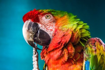 closeup photo of green and multicolored parrot