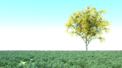 Aluminium Prints Olive landscape 3D