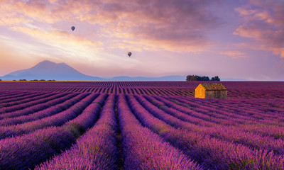Montage in der Fensternische Rosa hell Lavender Dream - Valensole France