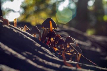 Pilze im Wald, Park, Natur, Herbstbild